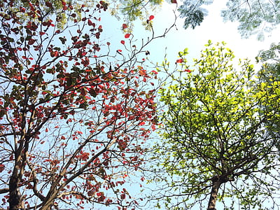 Red and Green Tree Leaves on a Sunny Day