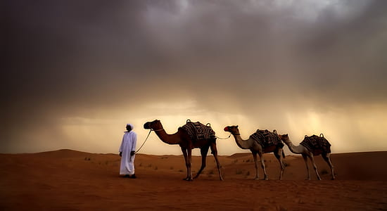 man with white thobe beside three brown camels on brown desert