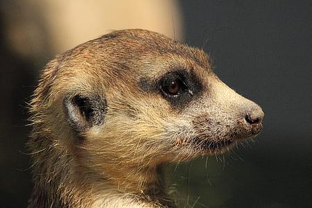 selective focus photography of brown animal