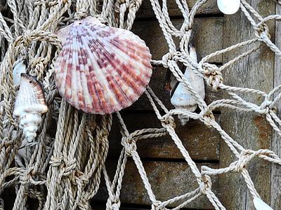 seashells on beige rope net