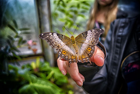 brown and yellow swallowtail butterfly perched on human hand in close-up photography