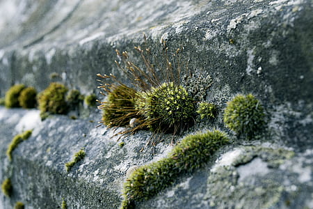 Green Moss on Concrete