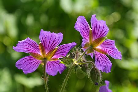 two purple petal flowers