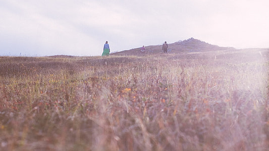 two person in green grass field