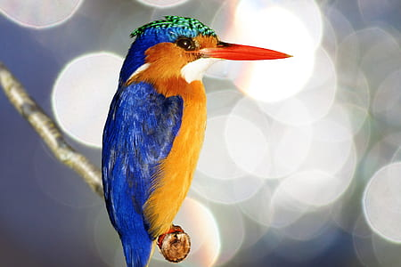 selective photography of blue and yellow bird on tree branch