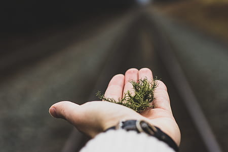 person holding green moss