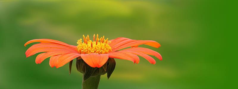 selective focus photography of orange daisy