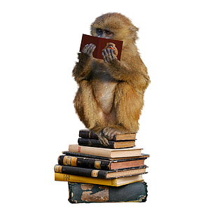 brown monkey reading book white sitting on pile of books