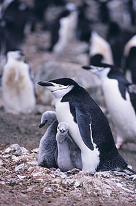 shallow focus photography of penguins