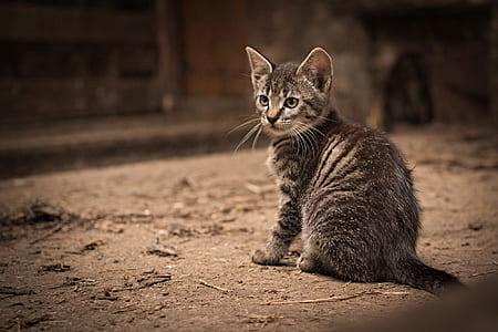 silver tabby cat on brown floor