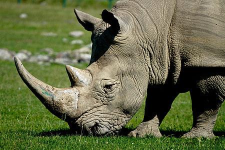 rhinoceros on green grass during daytime