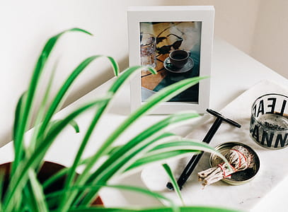 green leaf plant and white wooden photo frame