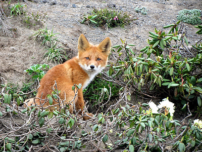 brown fox and green leafed plants