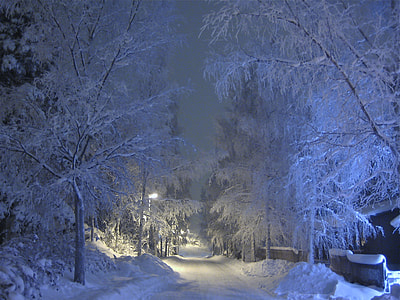 trees filled with white snow