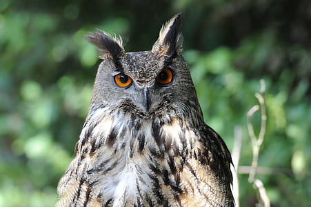 selective photography of gray great horn owl