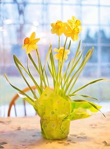 yellow daffodil flower arrangement in green wrapper
