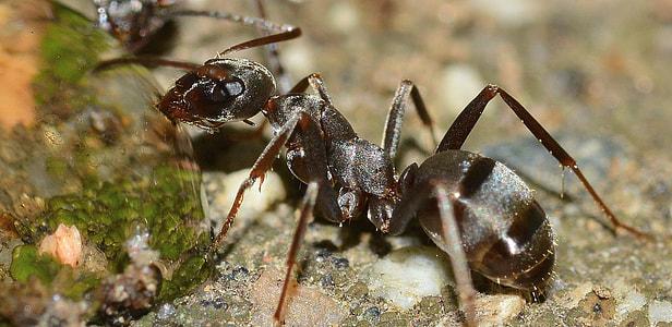 macro photography of garden ant