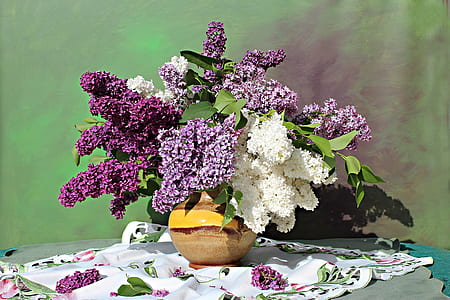still life photography of white and purple petaled flowers