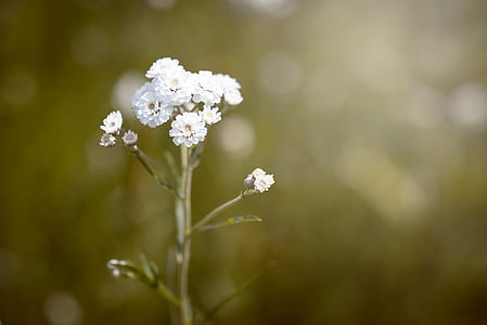 selective focus photography of white cluster flowers