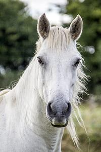 white horse standing near trees