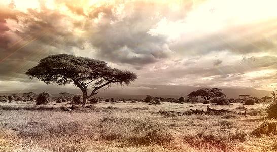 landscape photo of a tree