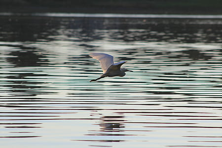 white bird flying near the water