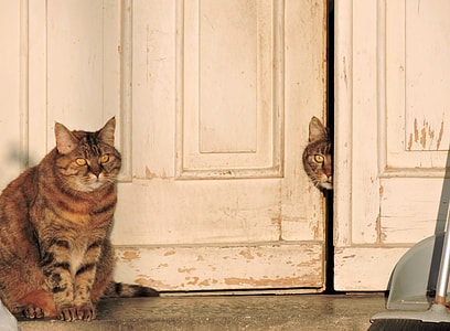 two silver tabby cats near white wooden door