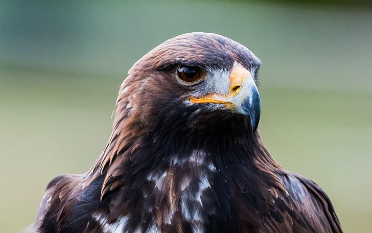 macro shirt of gray and black eagle
