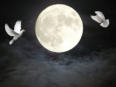 two doves flying near full moon