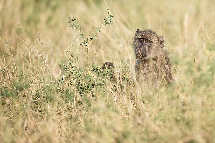 photo of monkey near green grass
