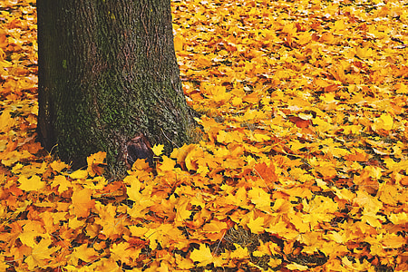 Fall tree leaves on the ground in forest