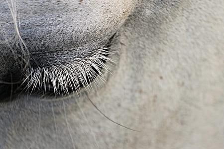 white horse's eye close-up photo