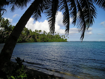 blue body of water near green palm trees