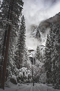 grayscale photo of snow-covered trees near hills