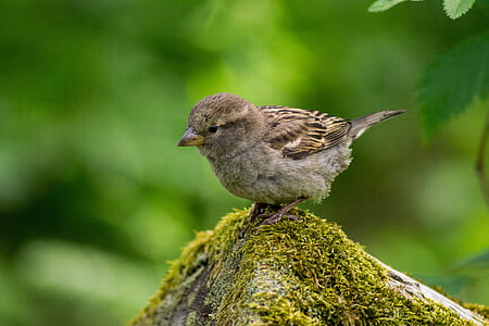 brown sparrow on driftwood