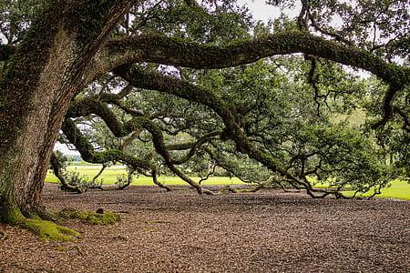 green tree near green grass field