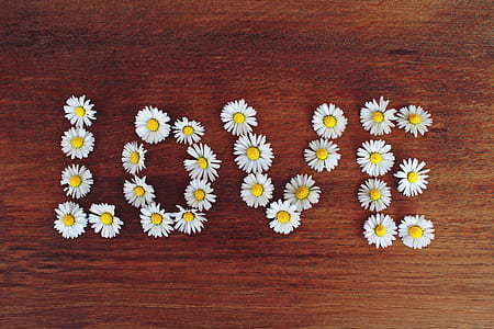 LOVE daisy flower artwork