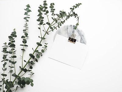 photo of white clip board with green leaf plant