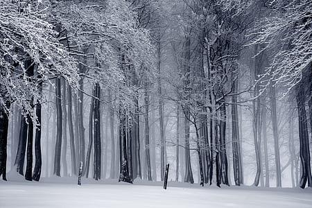 snowed trees photo