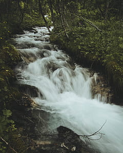 Forest Water Falls