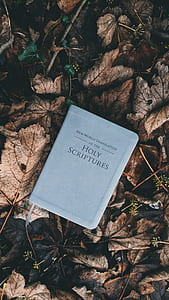 Holy Scriptures book on ground with dried leaves