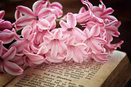 pink petaled flowers on book