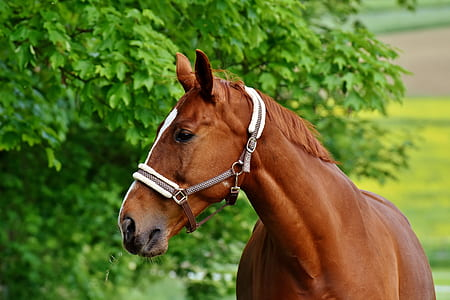 photo of horse head with tree on background