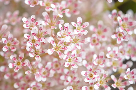 white-and-pink flower in close up photography