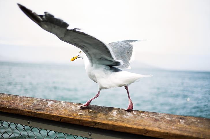 photography of white bird