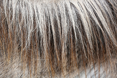 brown and gray hair