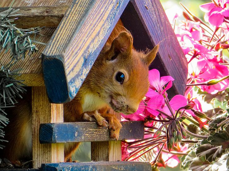 brown chipmunk in brown wooden house