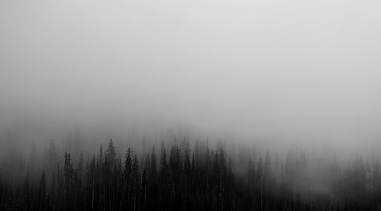 nature, forest, tree, fog