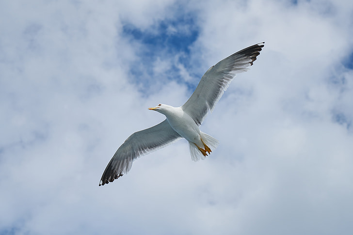 white pigeon spreading its wings