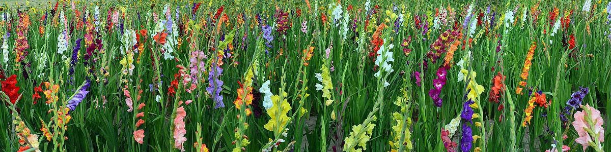 assorted-color petaled flower field